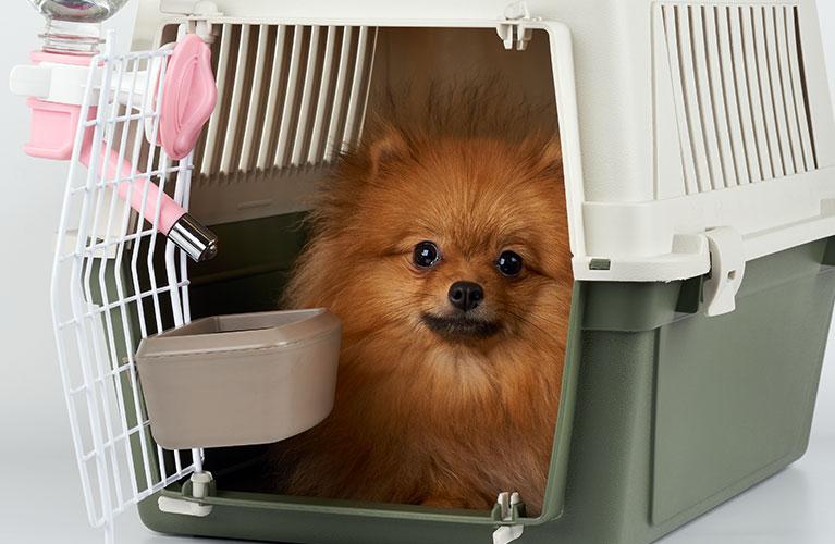 Animal Transportation Charters