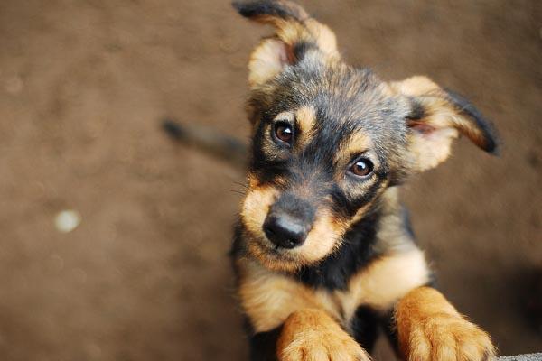 Dogs - Animal Transportation Charter