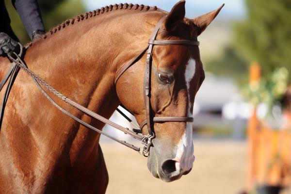 Equine - Animal Transportation Charter