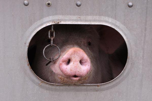 Livestock - Animal Transportation Charter