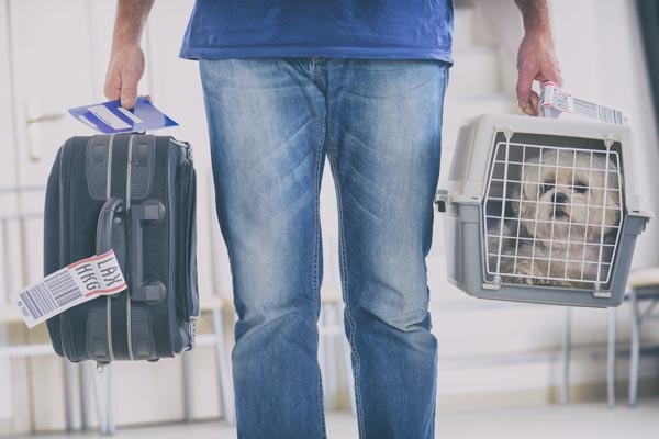 Pet Concierge - Animal Transportation Charter