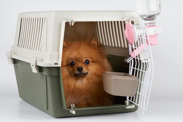 Pet Flight - Animal Transportation Charter