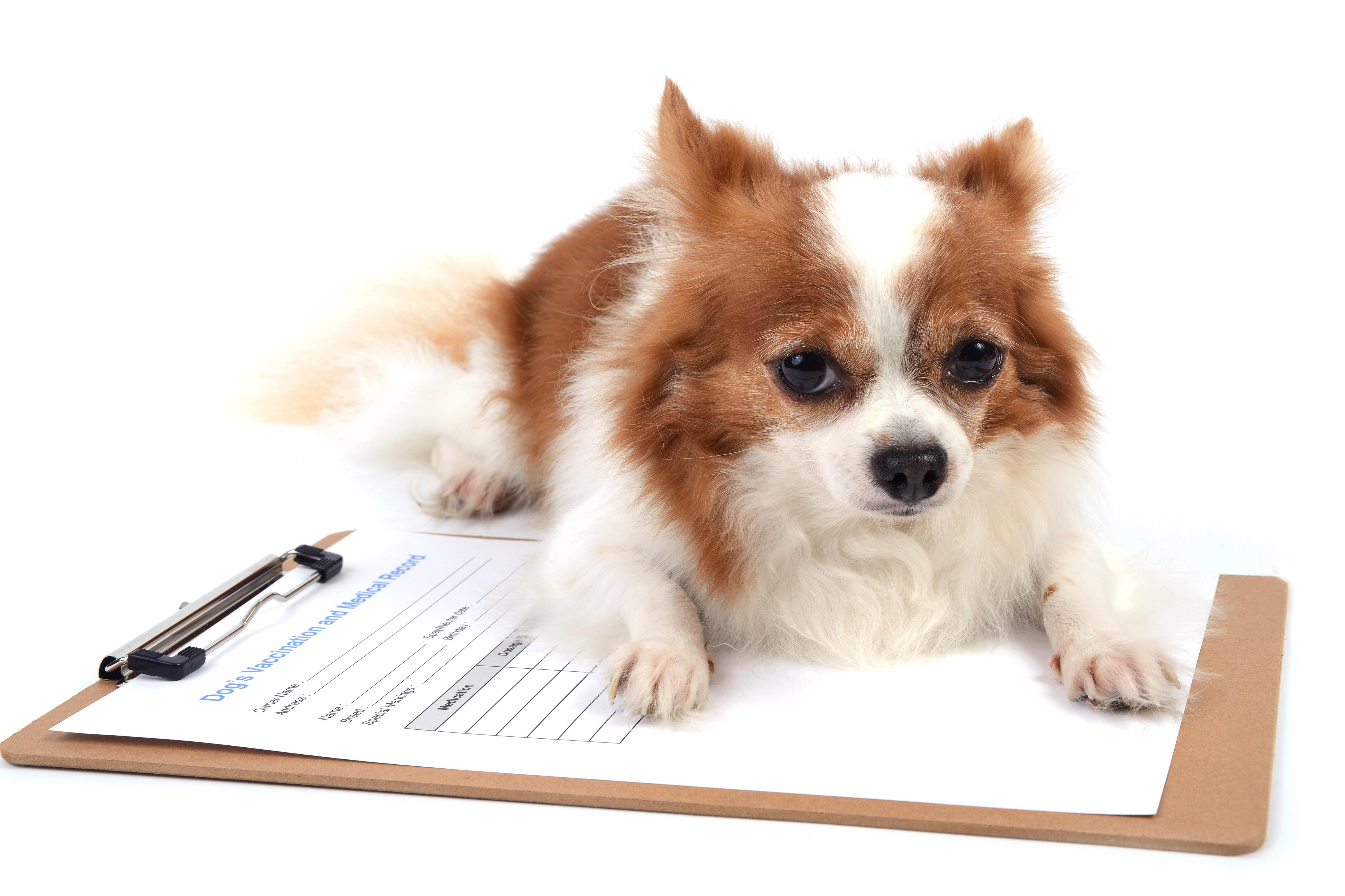 Documentation - Animal Transportation Charter